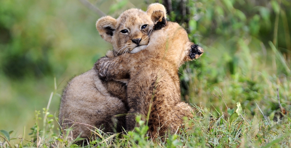 HUGS by RayMorris1, Licensed under CC BY-NC-ND 2.0